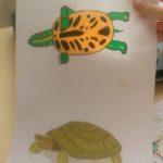 Зарисовки домашних животных. Работы учеников третьих классов.